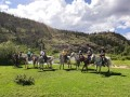 horseback riding creede colorado 01